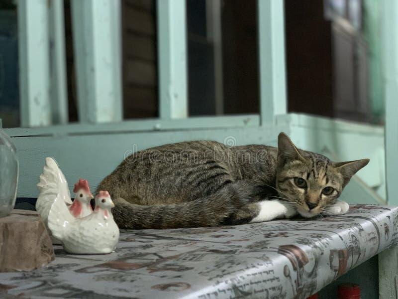 Weinig kat met Kippenpop royalty-vrije stock foto's