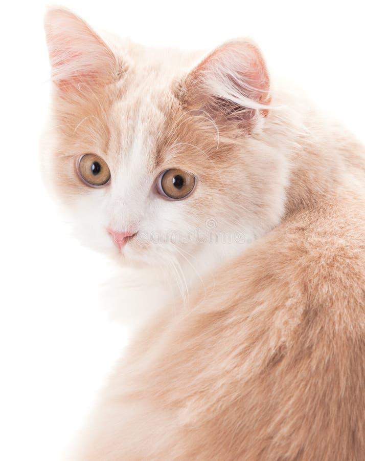 Weinig kat op een witte achtergrond stock afbeelding