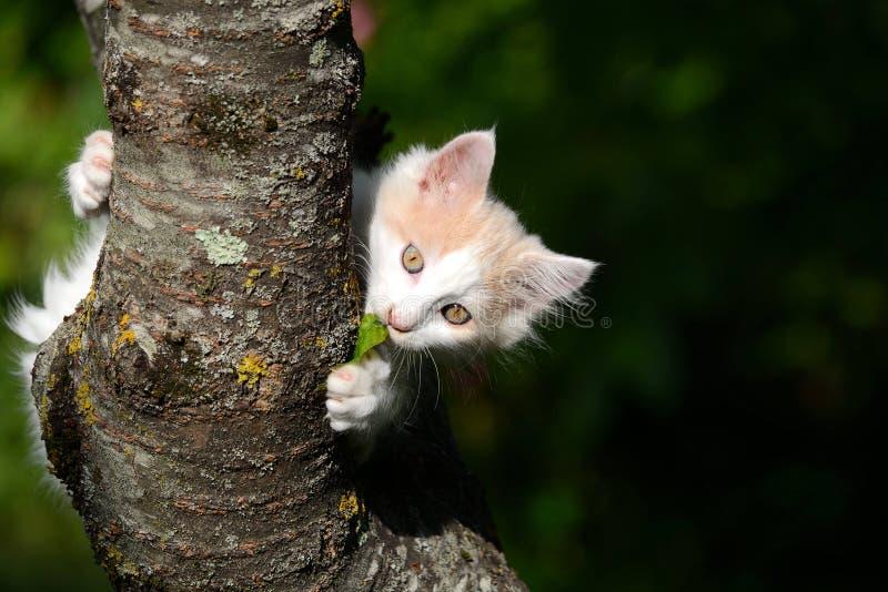 Weinig katje in boom royalty-vrije stock afbeelding