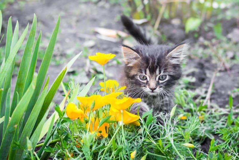 Weinig katje in de tuin dichtbij de gele bloemen Een weinig ki stock foto
