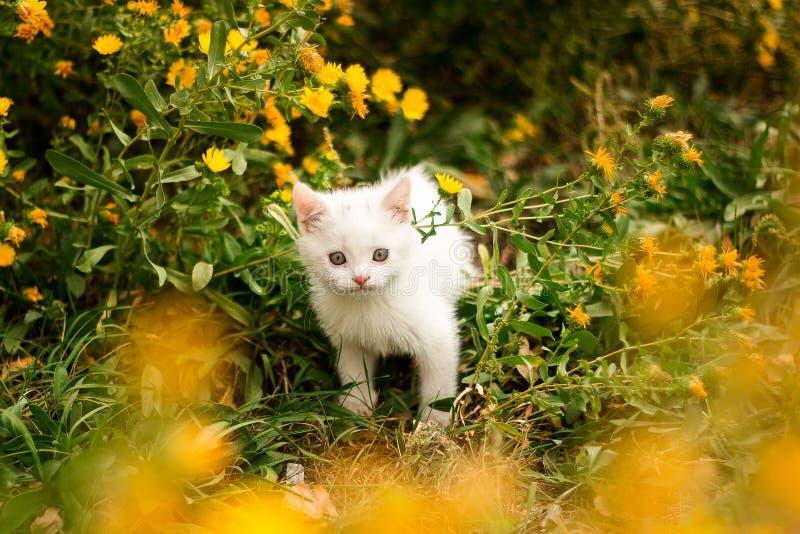Weinig katje in de tuin dichtbij de gele bloemen Een klein katje op de aard gaat naar de eigenaar stock afbeeldingen