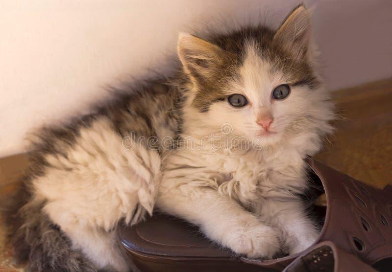 Weinig katje die op Pantoffels in het huis dichtbij de muur liggen royalty-vrije stock foto