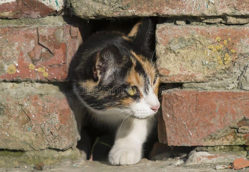 weinig katje die vreselijk uit een gat in het baksteenhuis gluren royalty-vrije stock foto