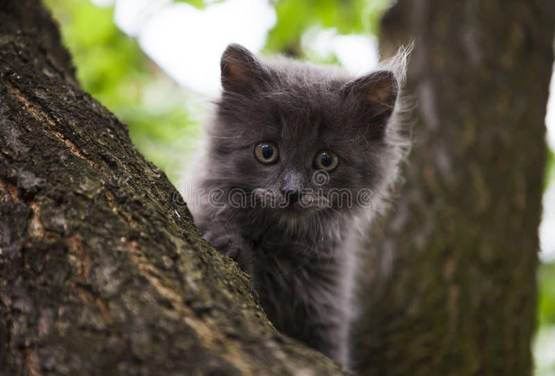 Weinig katje in een boom royalty-vrije stock afbeelding