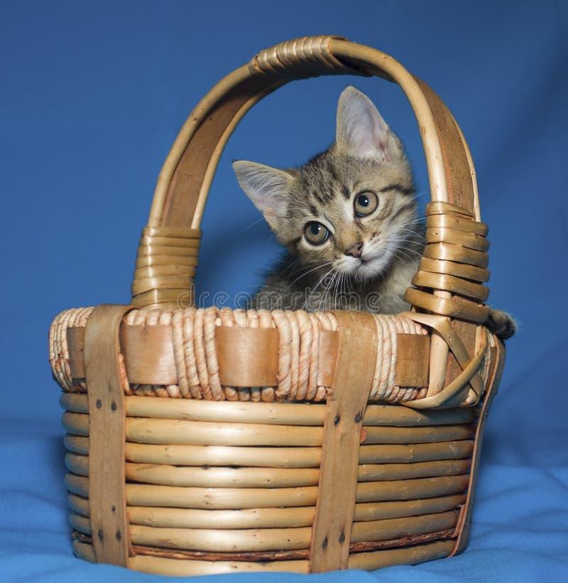 Weinig katje in een mand stock foto