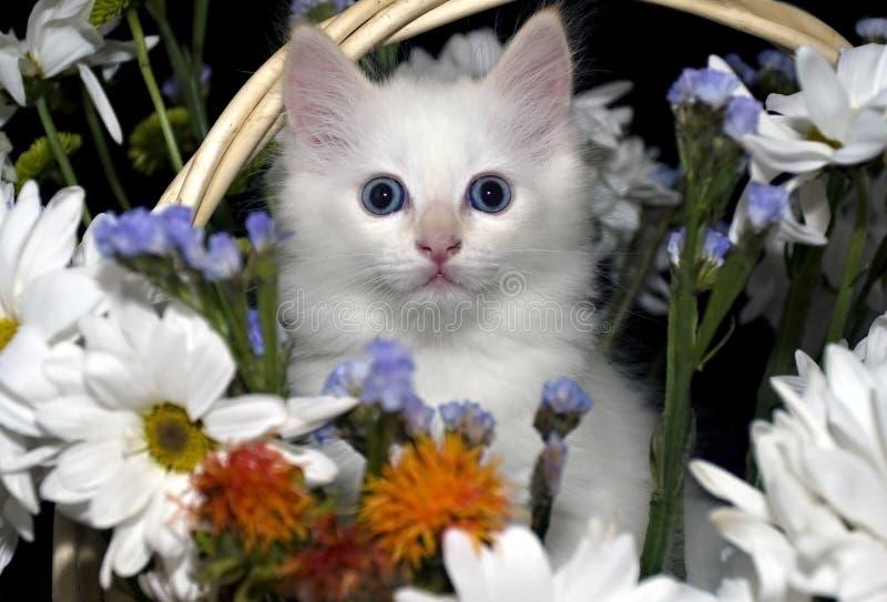 Weinig katje in een mand van bloemen stock fotografie