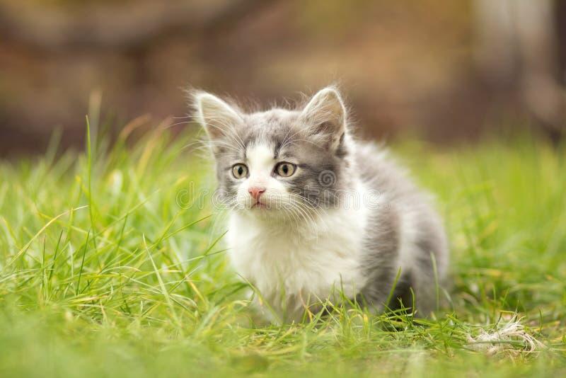 Weinig katje het spelen in het gras stock foto