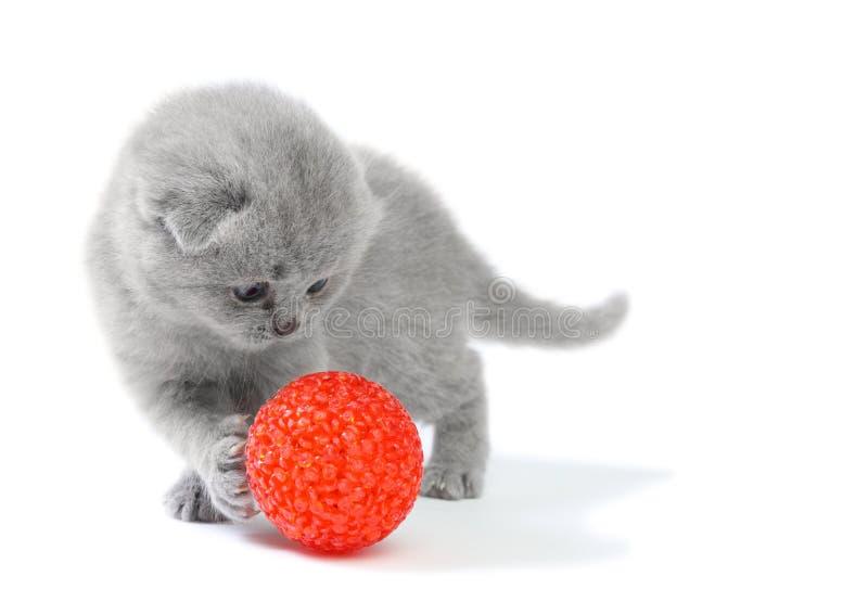 Weinig katje het spelen met bal stock fotografie