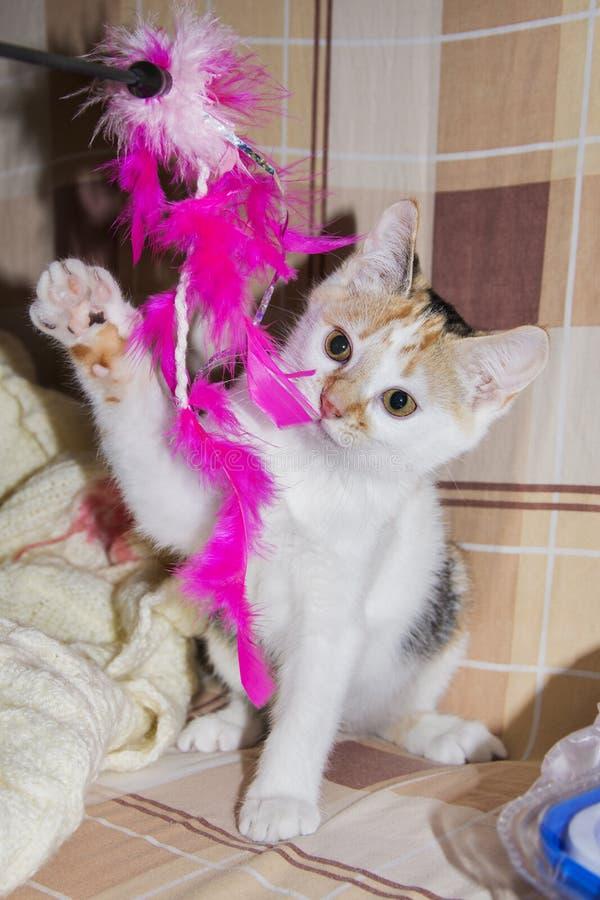 Weinig katje het spelen met een stuk speelgoed stock foto
