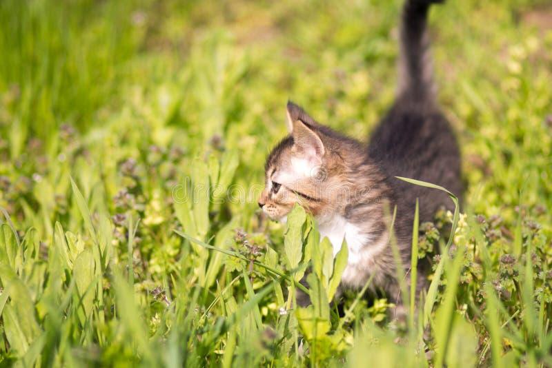 Weinig katje loopt in gras royalty-vrije stock afbeeldingen