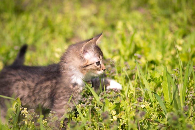 Weinig katje loopt in gras stock fotografie