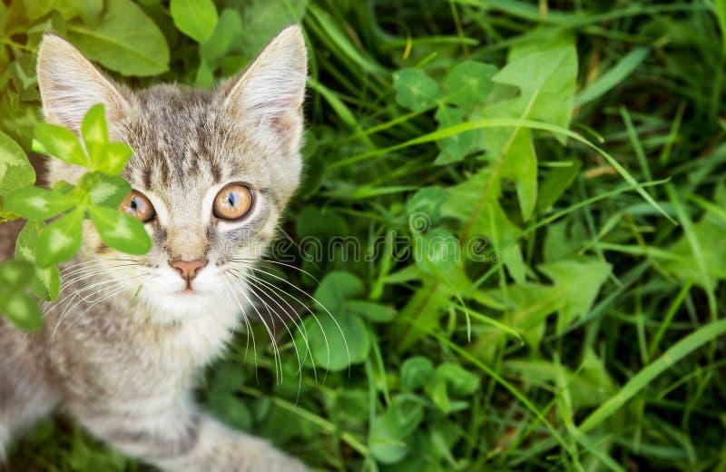 Weinig katje loopt in gras stock afbeeldingen