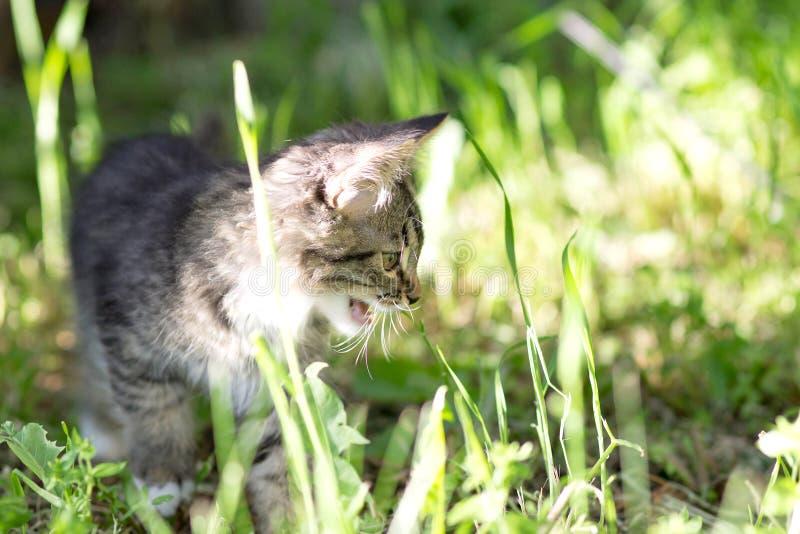 Weinig katje loopt in groen gras royalty-vrije stock afbeeldingen