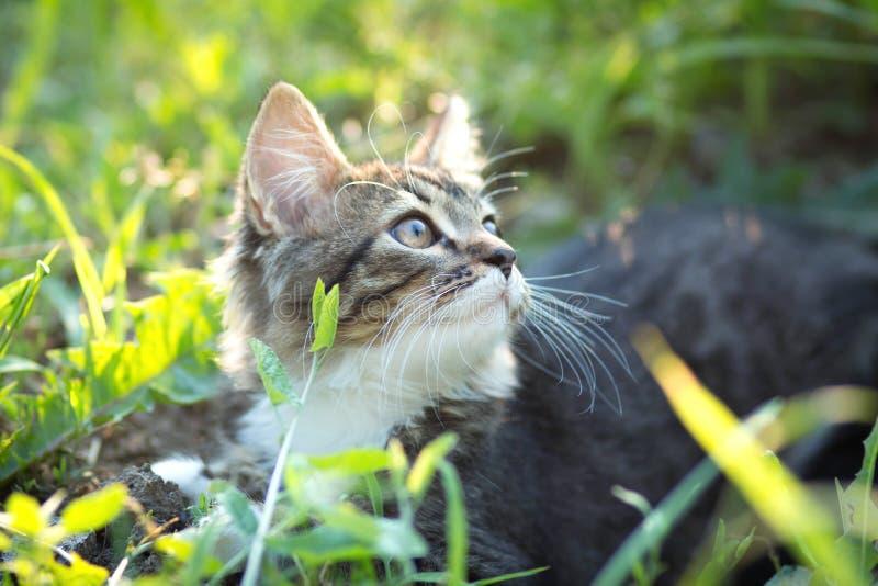 Weinig katje op aard stock afbeelding