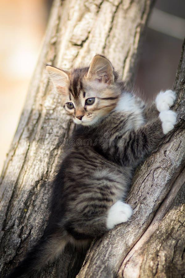 Weinig katje op de boom stock foto