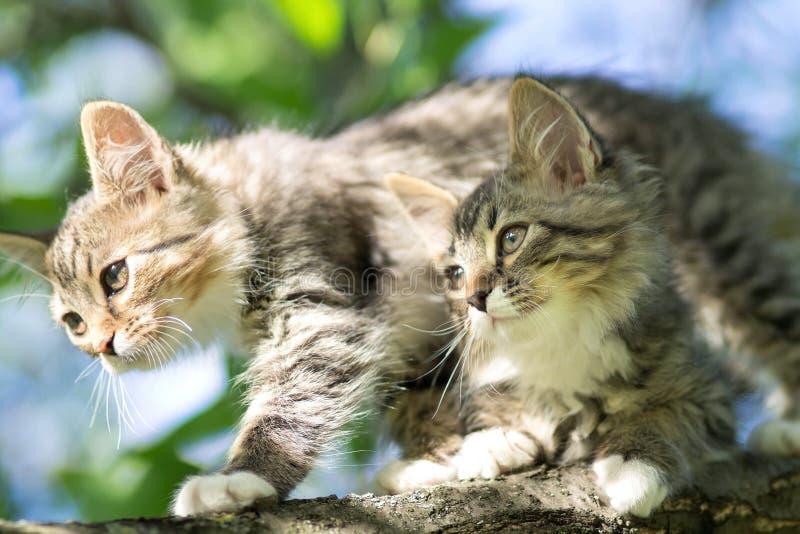Weinig katje op de boom stock foto's