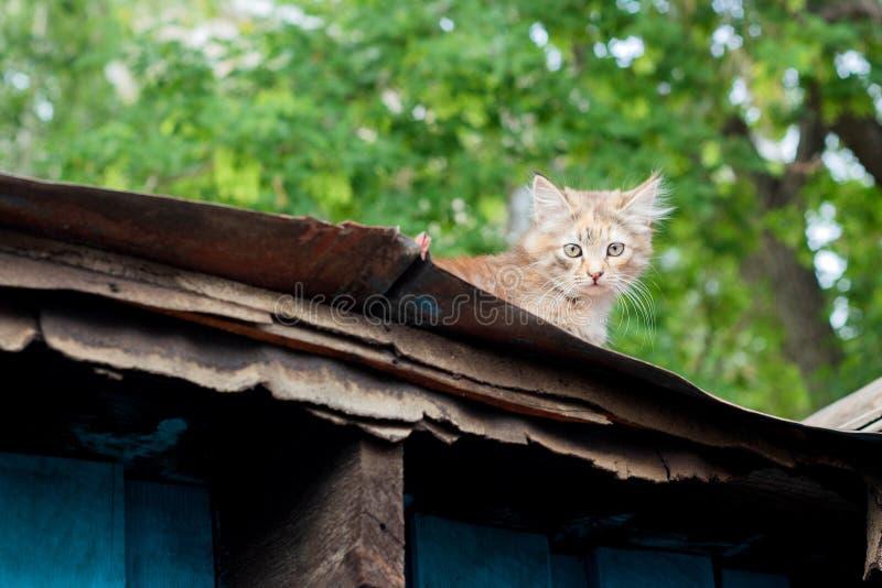 Weinig katje op het dak royalty-vrije stock foto