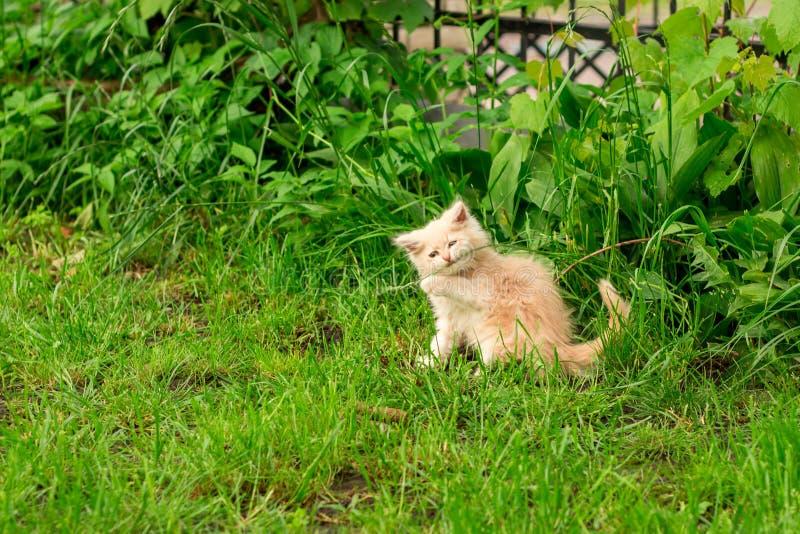 Weinig katje speelt openlucht op het gras in de tuin, zoekend de jacht, omhoog sluit, aard op achtergrond stock fotografie
