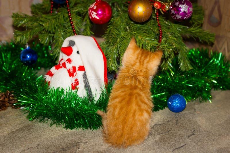 Weinig katje van de gestreepte katgember is dichtbij Kerstboom stock afbeelding