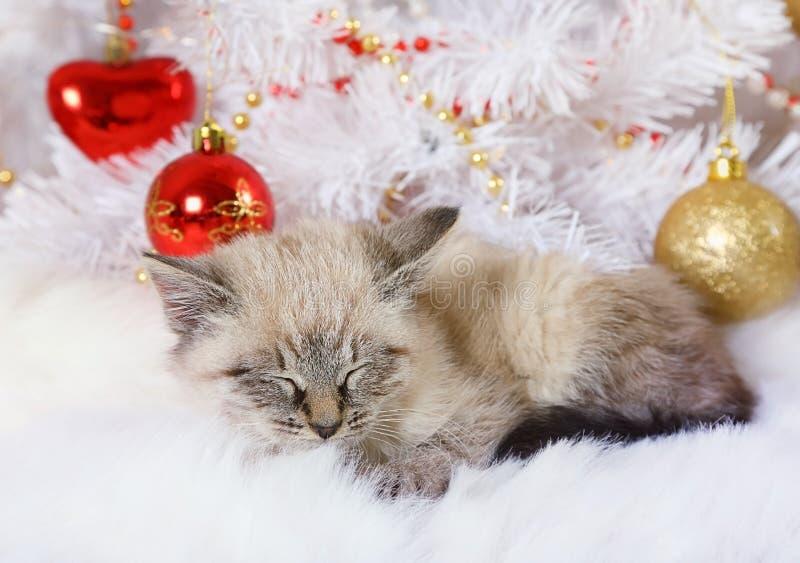 Weinig katje viel in slaap onder de Kerstboom royalty-vrije stock foto