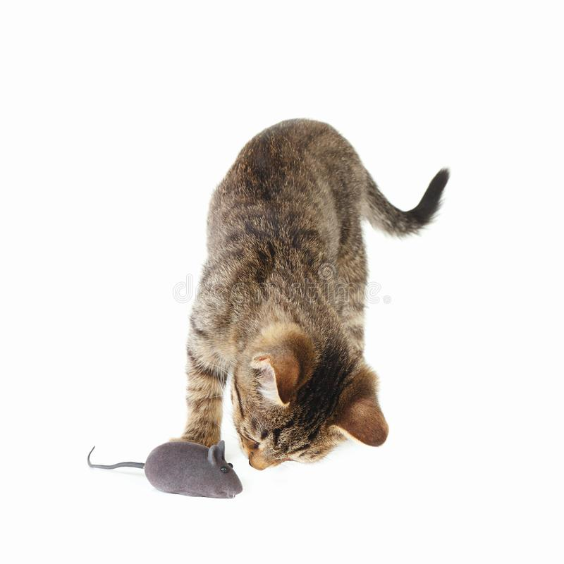 Weinig katje wordt gespeeld met een grijze stuk speelgoed muis op witte achtergrond royalty-vrije stock fotografie