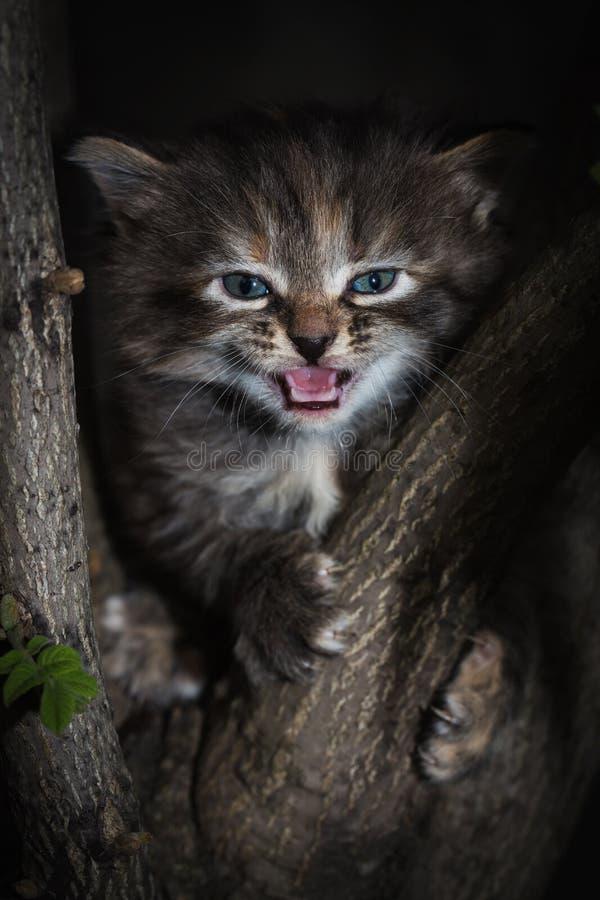 Weinig katjeszitting op een boom stock afbeelding