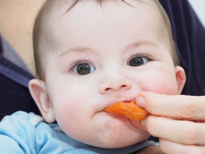 Weinig Kaukasische babyjongen die droge abrikoos eten royalty-vrije stock afbeeldingen