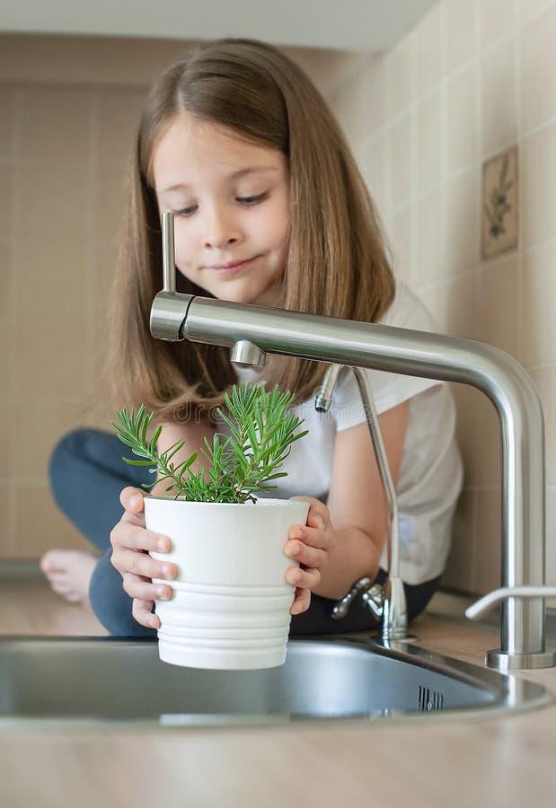Weinig kind die een pot met Rosmarinus-officinalisrozemarijn houden Het voeden van en het water geven van een jonge groene instal stock afbeelding