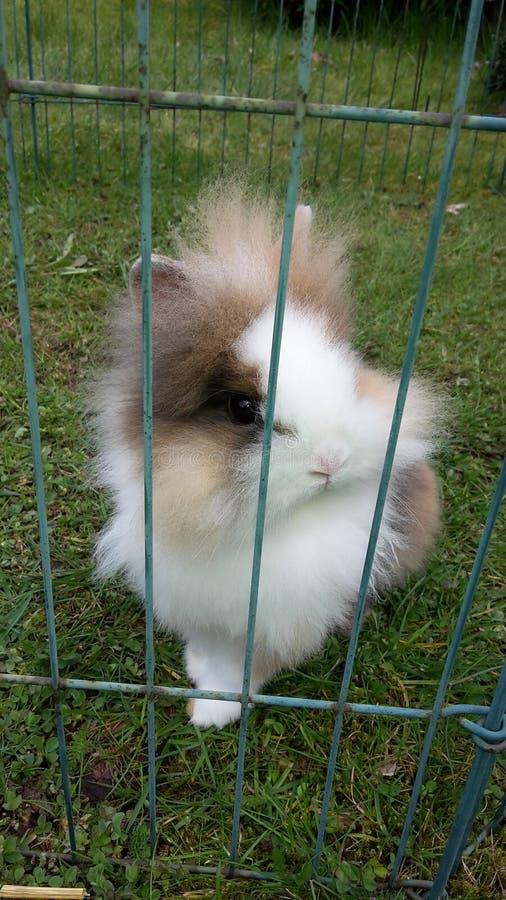 Weinig konijn stock fotografie