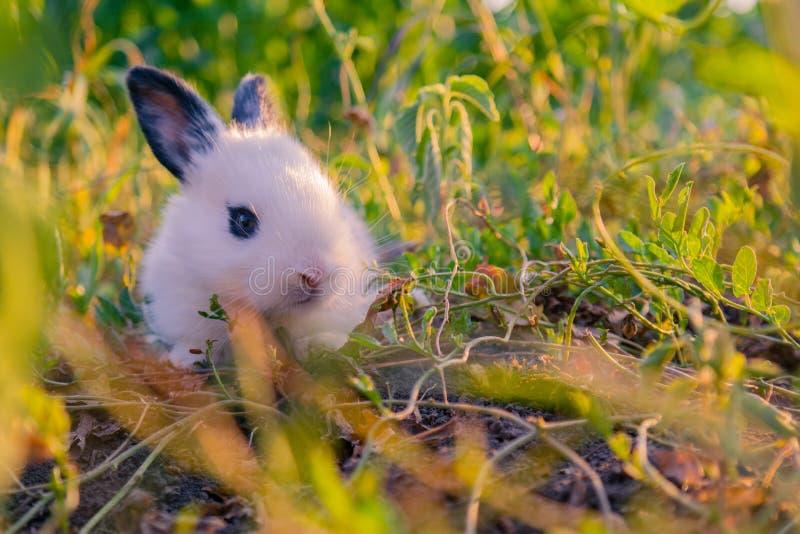 Weinig konijn royalty-vrije stock fotografie
