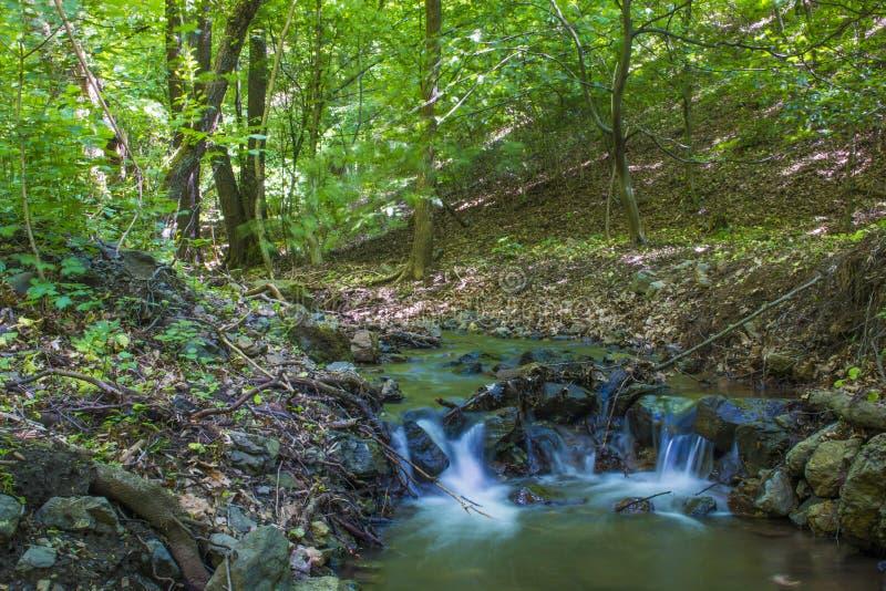 Weinig kreek in het bos royalty-vrije stock afbeelding