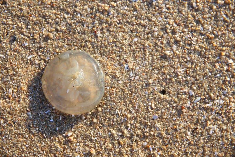 Weinig kwal op het zand stock foto's