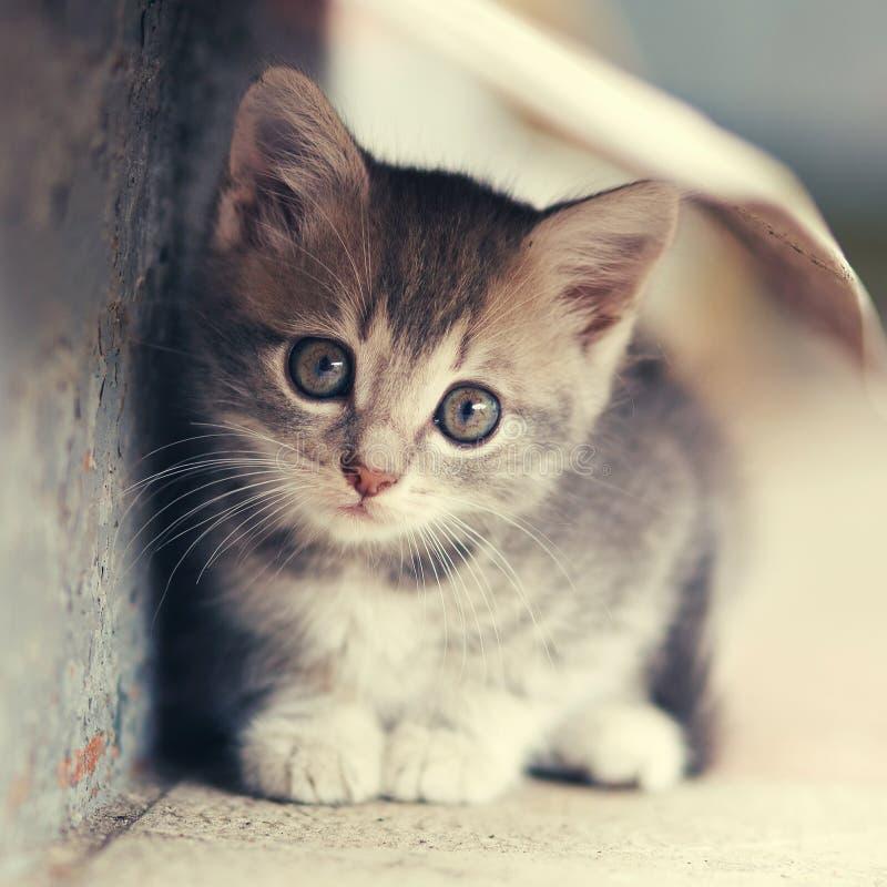 Weinig leuk katje die in openlucht situeren royalty-vrije stock foto