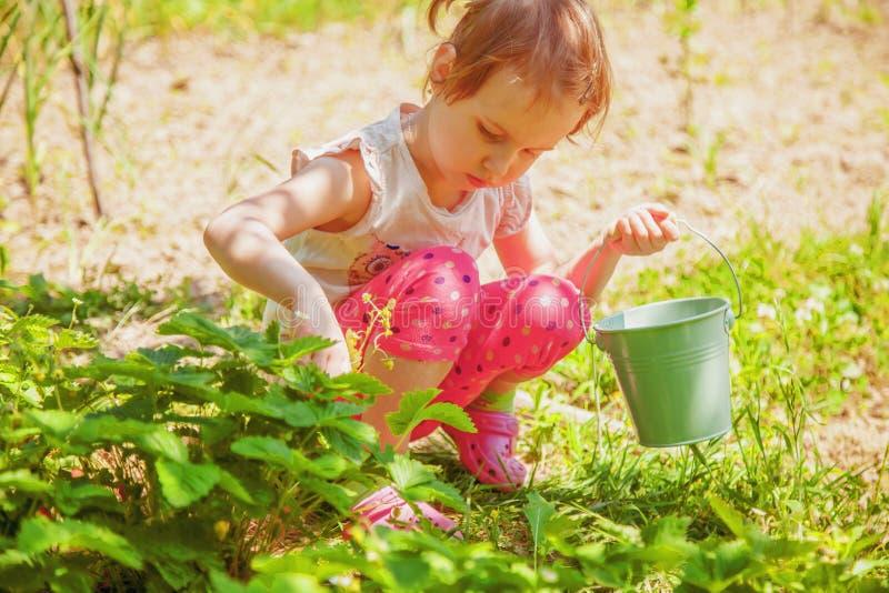 Weinig leuk kindmeisje die pret op aardbeilandbouwbedrijf hebben in de zomer Kind die gezonde natuurvoeding, verse bessen eten La stock afbeelding