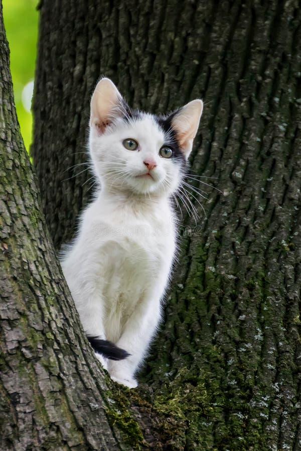 Weinig leuke kattenzitting op een boom royalty-vrije stock foto's