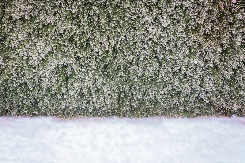 Weinig madeliefje bloeit en witte watten in huwelijksachtergrond s stock foto