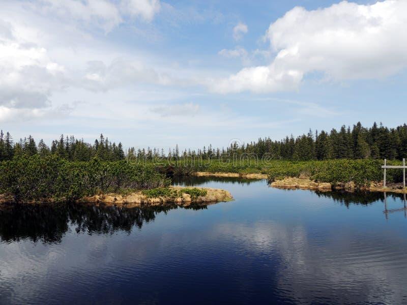 Weinig meer in het midden van het bos stock foto