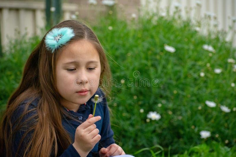 Weinig meisje die van Latina in tuin paardebloem overwegen stock afbeeldingen