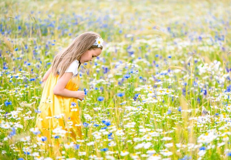 Weinig mooi meisje in het gele Russische kleding plukken bloeit op gebied van wilde bloemen op de zomerdag stock foto's