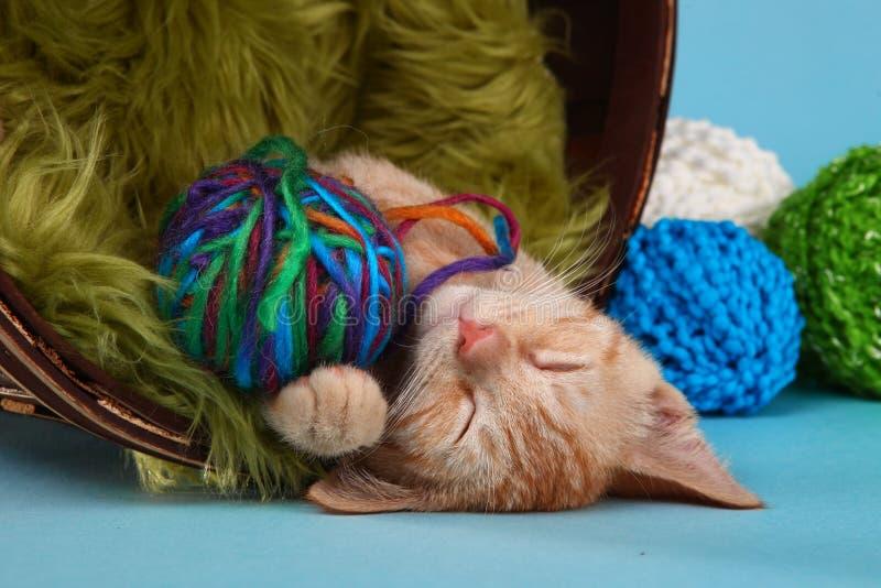 Weinig Oranje Tabby Kitten in Studio stock foto's