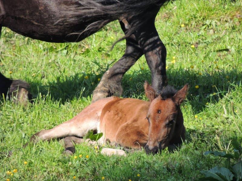 Weinig Paard royalty-vrije stock fotografie