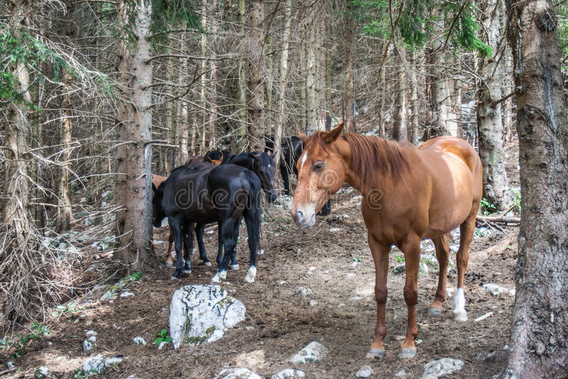 Weinig paarden in een bos royalty-vrije stock afbeelding