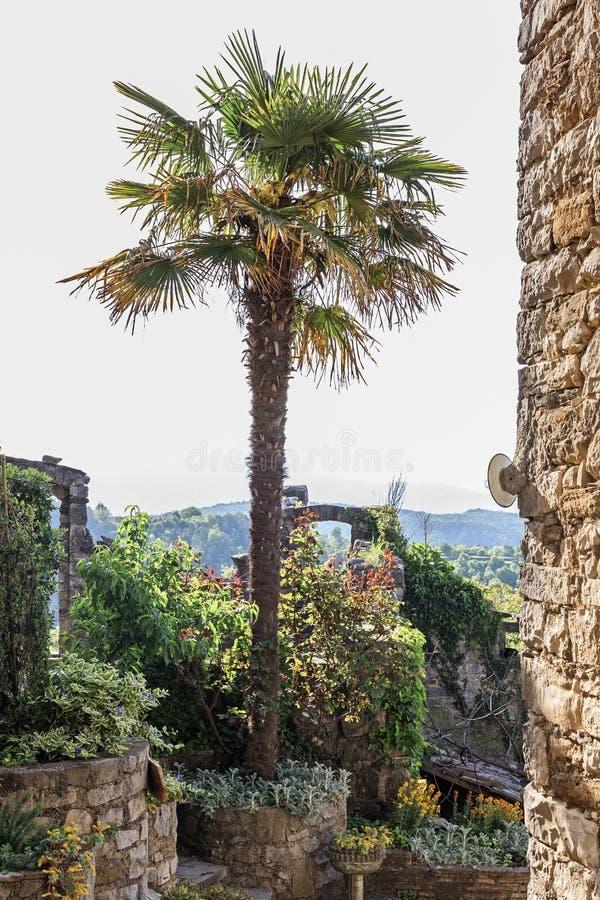 Weinig park in Gezoem in Istria royalty-vrije stock foto
