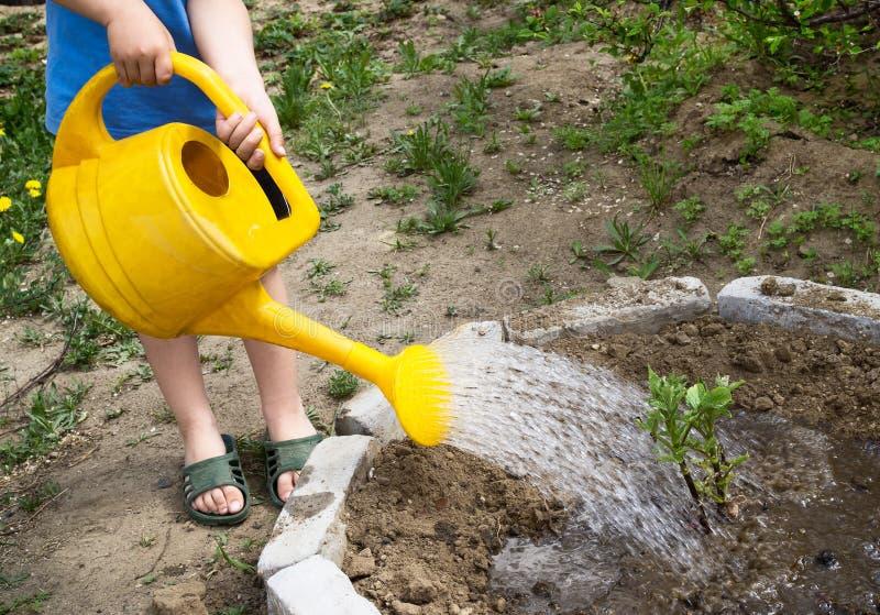 Weinig peuterjongen het water geven installaties met gieter in de Gard stock afbeeldingen
