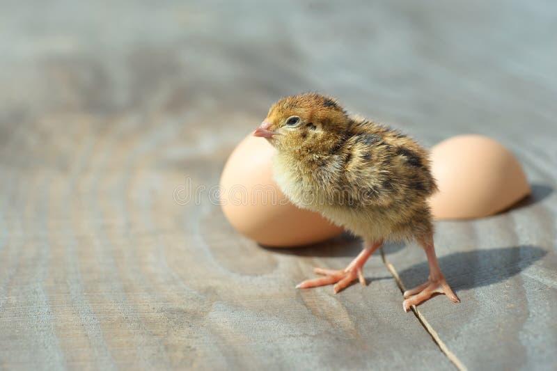 Weinig pluizig geel die kuiken van het ei wordt uitgebroed Kuiken en eierschaal op een houten lijst royalty-vrije stock afbeelding