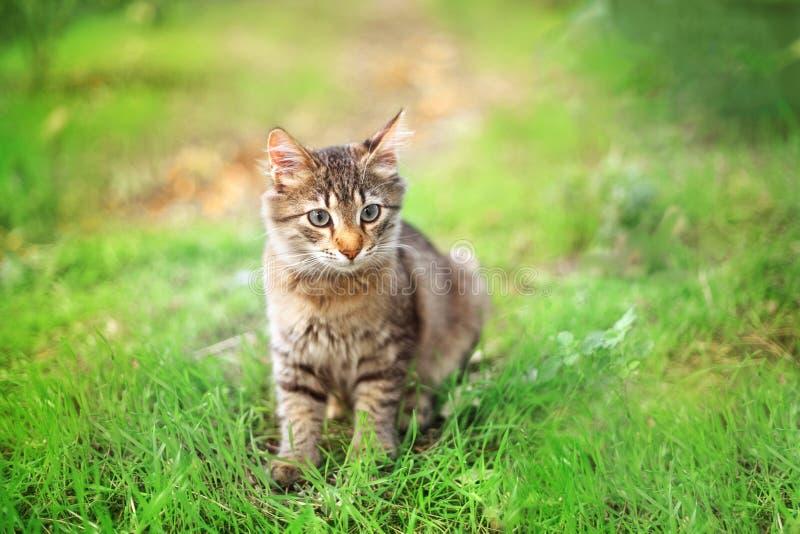 Weinig pluizig katje loopt in het park royalty-vrije stock afbeeldingen