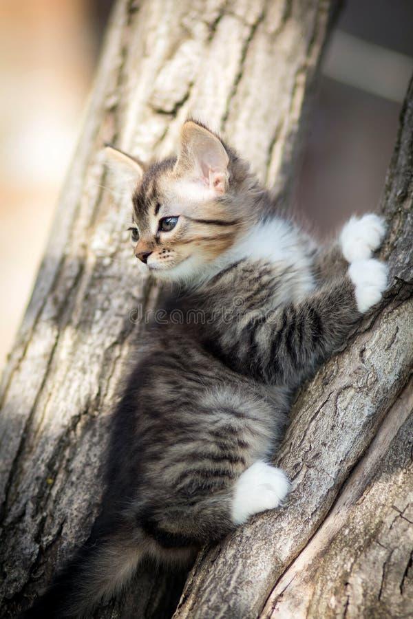 Weinig pluizig katje op de boom stock foto's