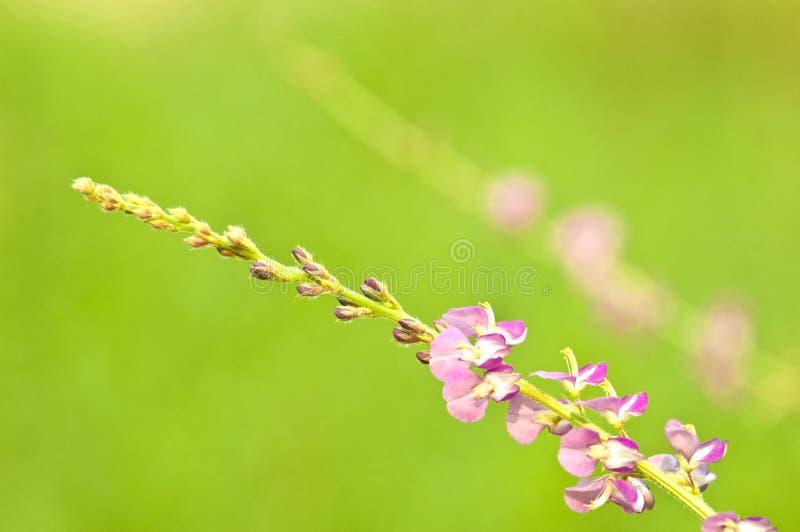 weinig purpere bloem op groene achtergrond royalty-vrije stock foto's