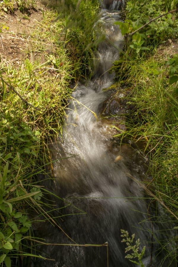 Weinig rivier in het bos tussen de bomen royalty-vrije stock afbeelding