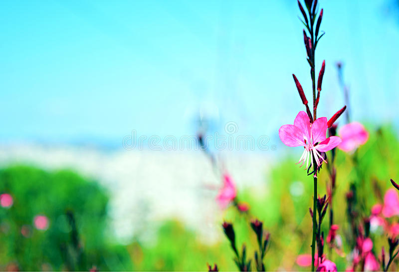 Weinig roze bloem in een tuin stock afbeeldingen